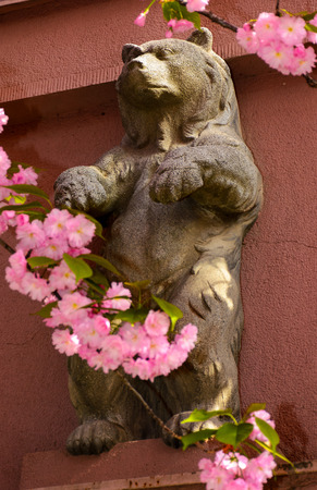 bear sculpture among the cherry blossom flowers. beautiful springtime background