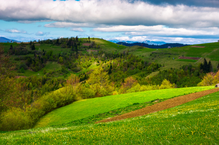 agricultural field on a grassy hill. beautiful rural scenery of Carpathian mountains on a cloudy day Stock Photo