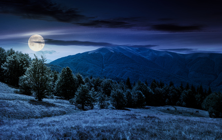 beech forest on grassy meadows in mountains at night in full moon light. beautiful Landscape at the foot of Carpathian mountain Apetska Stock Photo
