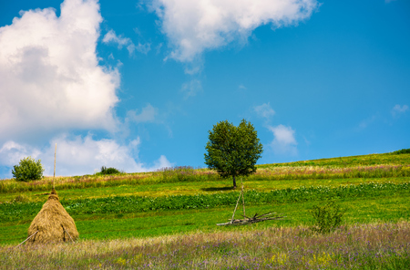 haystack and a tree on the grassy field. beautiful summer countryside of mountainous area Stock Photo