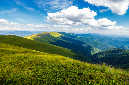 fluffy clouds over the mountain ridge. gorgeous summer landscape of Carpathian alps. fresh and green environment concept. beautiful travel background