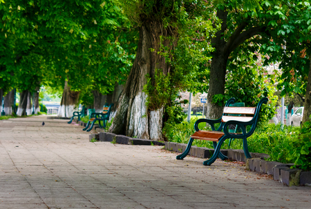 bench in the shade of chestnut alley. lovely urban scenery in summer Stock Photo