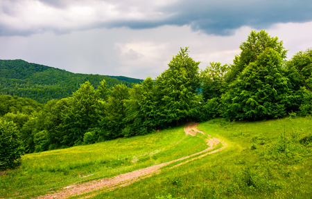 country road hides in the woods. lovely countryside scenery in mountains