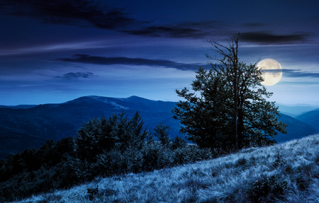 tree on the grassy hillside on at night in full moon light. lovely summer landscape of Carpathian mountain Svydovets ridge.