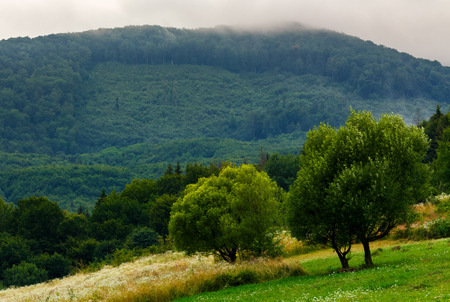 abandoned orchard in mountains. summer countryside on a cloudy day Stock Photo