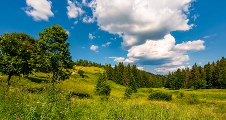 森林に覆われた丘の中の草原。雲の列と青空の下の美しい夏の風景