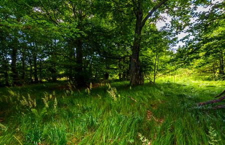 木の下の高い草。素敵な夏の自然の風景