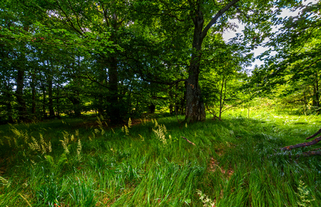 tall grass under the trees. lovely summer nature scenery