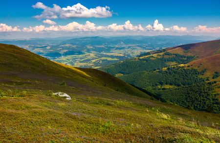 colorful grass on mountain hillside. lovely landscape in late summer Reklamní fotografie