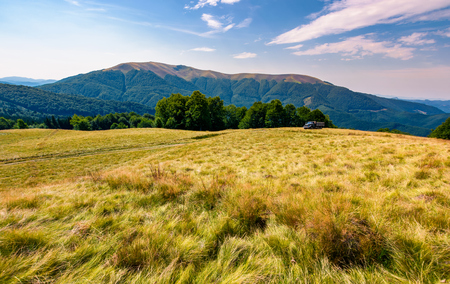 large grassy meadow of Carpathians. gorgeous landscape in fine afternoon weather. Apetska mountain in the distance
