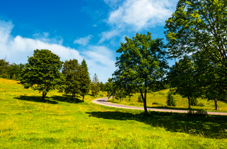 trees on grassy hill along the road. vivid summer landscape in mountainous area