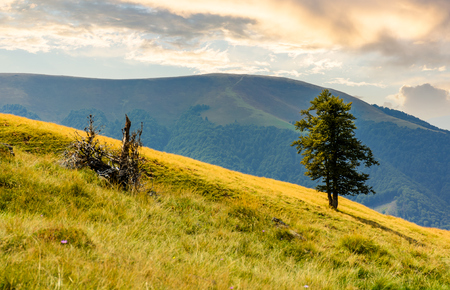 tree on the grassy hillside. Apetska mountain in the distance. beautiful summer nature scenery in mountains