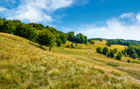 path up the forested hill. beautiful summer landscape in mountains Stock Photo