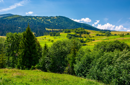 row of trees on Carpathian hills. beautiful countryside scenery of mountainous rural area