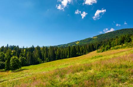 スプルースの森の中の広い草原。山の美しい夏の風景