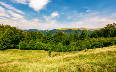 forested hill on the meadow in summer. lovely landscape with Svydovets mountain ridge in the distance
