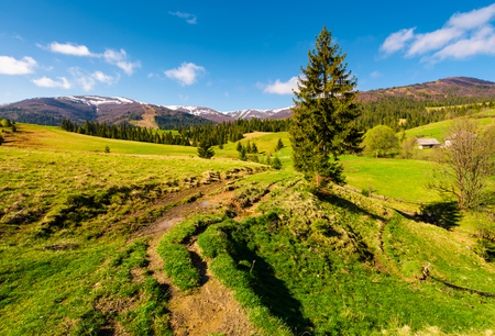 rural are in Carpathian mountains in springtime. lovely scenery with rural fields between forest and village outskirts