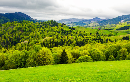 forested hills of mountainous rural area. beautiful springtime countryside landscape.