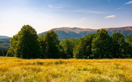 beech forest at the foot of Apetska mountain. lovely summer landscape of Carpathian mountains Stock Photo - 99925324