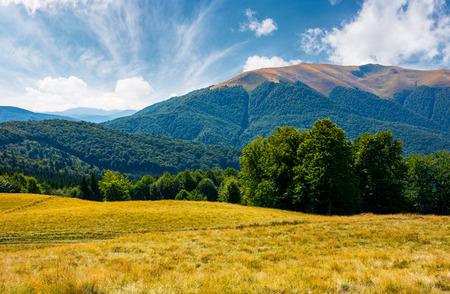 アペスカ山のふもとにあるブナの森。カルパティア山脈の素敵な夏の風景 写真素材