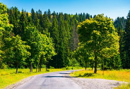 森の中を田舎道。新鮮な夏の朝に美しい風景