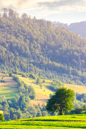 lonely tree on the grassy field in mountains. lovely rural scenery in summer Stock Photo - 99972542