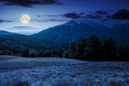 beech forest near Apetska mountain at night in full moon light. lovely summer landscape of Carpathian mountains