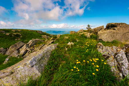 Dandelions among the rocks in Carpathian Alps. Heavy cloud on a blue sky over the mountain peak in the distance.  Vivid summer landscape at sunset. Stock Photo