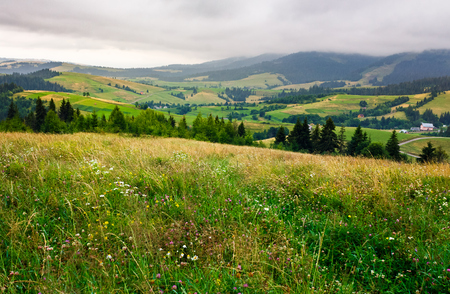 grassy meadow over the forest on a cloudy day. lovely mountainous countryside in summer time Stock Photo