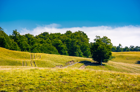 夏には草の多い丘の中腹の木々。素敵な自然の風景 写真素材