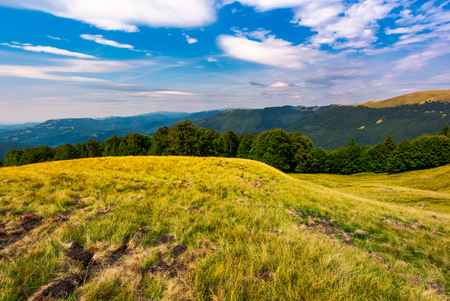 beautiful summer landscape of Carpathians. grassy slopes and forested hillsides. Ukrainian alps with Svydovets mountain ridge in the distance Stock Photo