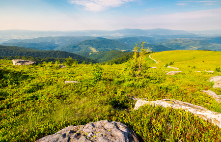 landscape of Carpathian high mountain ridge. lonely spruce tree among huge rocks on grassy hillside. gorgeous vewpoint with hills and peaks in the distance. spectacular scenery with blue sky and clouds in summer time