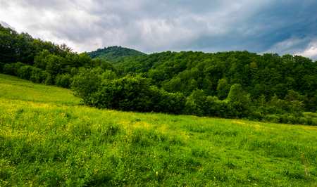 grassy pasture near the forest in stormy weather. natural agriculture concept. beautiful mountainous landscape. Stock Photo