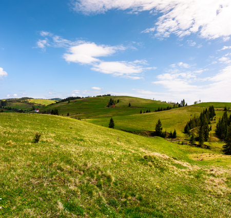 rolling hills of Podobovec valley. lovely rural landscape of Carpathian mountains, Ukraine