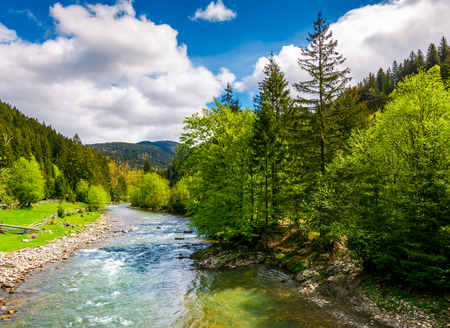 River flows among of a green forest at the foot of the mountain. Picturesque nature of rural area in Carpathians. Serene springtime day under blue sky with some clouds Stock Photo