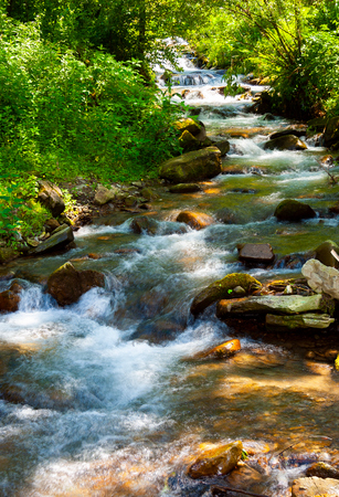 small water stream on sunny day. lovely summer nature scenery Stock Photo