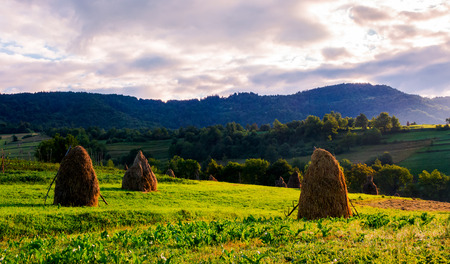 haystacks on the grassy field in mountains. lovely summer scenery of rural area in the morning Stock Photo