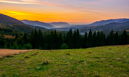beautiful sunset in Carpathian mountains. view in to the foggy valley of Synevyr National park. row of Spruce trees on the meadow in the foreground Stock Photo