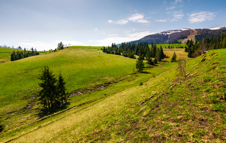 grassy hills at the foot of the ridge. beautiful nature scenery of Borzhava mountain ridge. springtime landscape with snowy mountain tops in the distance Stock Photo - 101061705