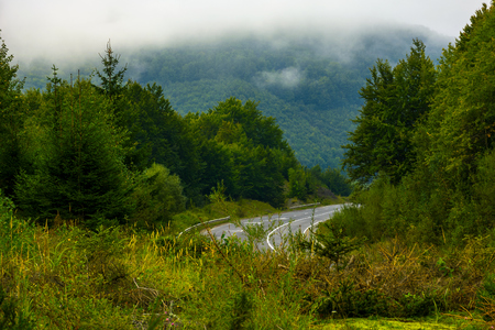 road among the forest in mountains. lovely nature scenery on a foggy day