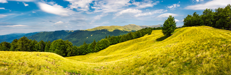 panorama of trees on the grassy hillside. Svydovets mountain ridge in the distance. beautiful summer afternoon nature scenery of Carpathian mountains, Ukraine Stock Photo