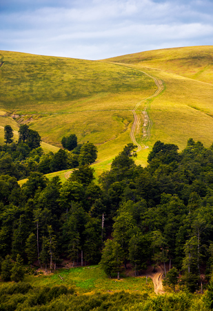 path through birch forest to the mountains. beautiful late summer scenery in Carpathian alps