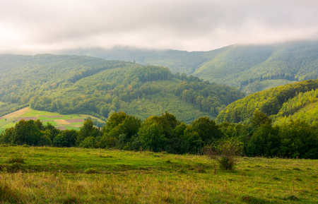 landscape with fields and  forest on hillside. lovely foggy sunrise in mountains Stock Photo