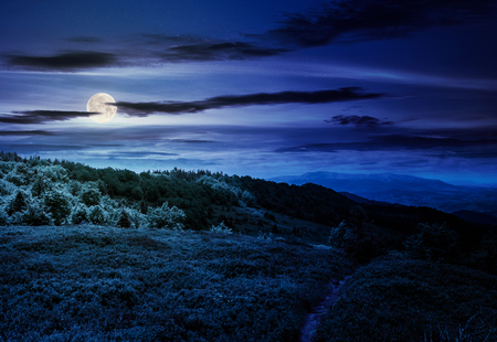 footpath through grassy mountain meadow at night in full moon light. beautiful Carpathian scenery