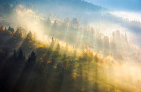 fog over the forest in morning light. beautiful nature background. trees with yellow foliage on rolling hills in autumn. amazing atmosphere in Carpathian mountains Stock Photo