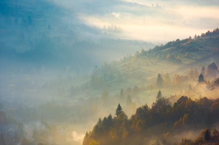 forested hills in rising autumn fog. amazing scenery in Carpathian mountains. beautiful nature background Stock Photo