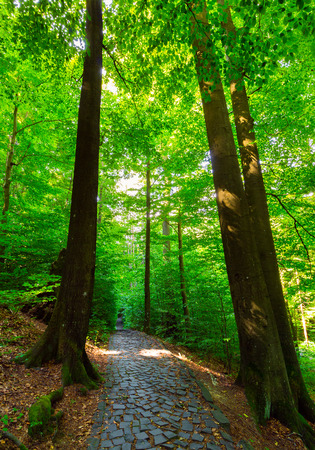 cobble stone path through forest. lovely nature scenery with tall trees and green foliage Stock Photo