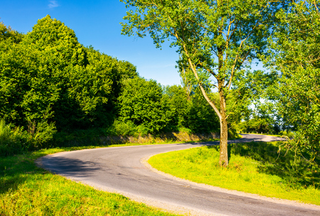 trees by the serpentine road in mountains. beautiful nature scenery in mountainous area. lovely transportation background Stock Photo