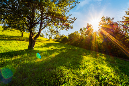 sunset in the apple orchard on hillside. lovely rural scenery in summer. beautiful agricultural background Stock Photo