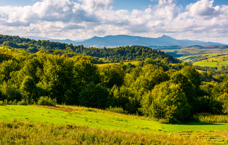 forest on a grassy hill in afternoon. Pikui mountain in the distance under the cloudy afternoon sky. Lovely Carpathian countryside Stock Photo